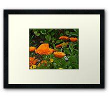 Colours Of Autumn For Brenda Framed Print