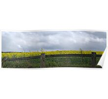 Rapeseed Fence Poster