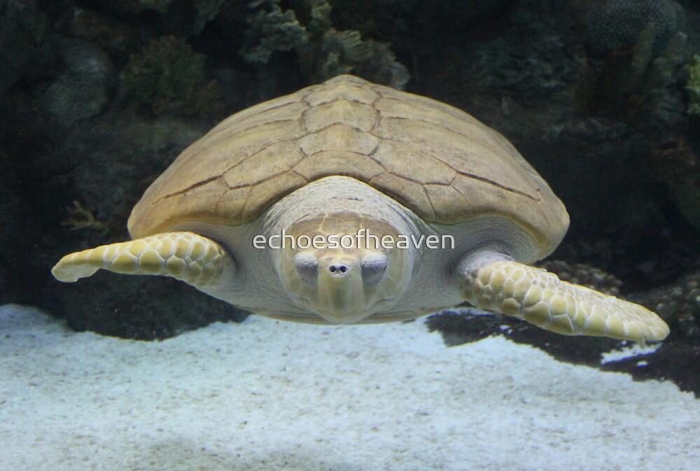 """""""Sea Turtle 2""""  by Carter L. Shepard by echoesofheaven"""