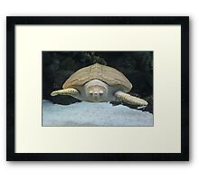"""Sea Turtle 2""  by Carter L. Shepard Framed Print"