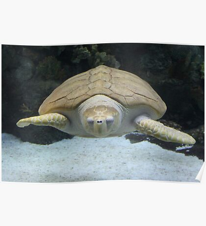 """""""Sea Turtle 2""""  by Carter L. Shepard Poster"""