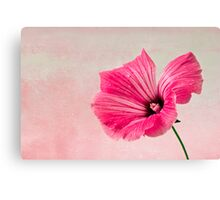 Pink Two Toned Lavatera  Canvas Print