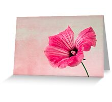 Pink Two Toned Lavatera  Greeting Card
