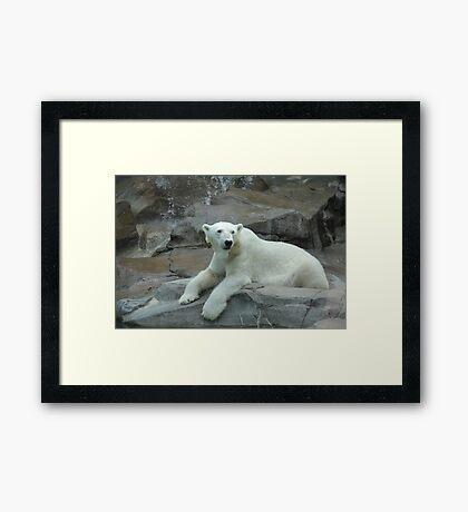 """Polar Bear""  by Carter L. Shepard Framed Print"