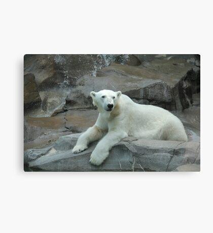 """Polar Bear""  by Carter L. Shepard Canvas Print"