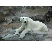 """Polar Bear""  by Carter L. Shepard Photographic Print"