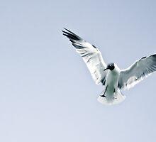 Flight. by ishore1