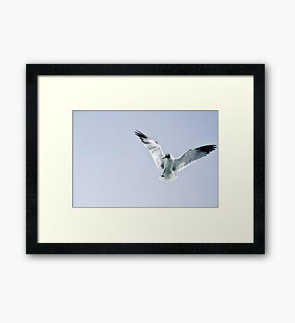 Flight. Framed Print