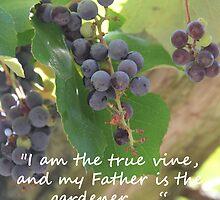"""""""John 15:1""""  by Carter L. Shepard by echoesofheaven"""