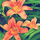 Orange Daylilies by Sharon Woerner
