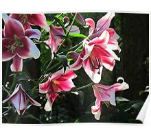 Kaleidoscope of Lilies Poster