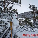 Frosty ..... Cradle Mountain Tasmania by Lynda Heins