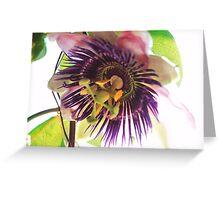 Passiflora- Passion Flower Greeting Card