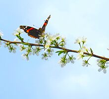 Butterfly sky by MarianBendeth