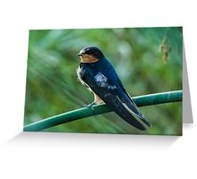 Evening Swallow Greeting Card