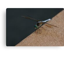 Dragonfly on Dock Canvas Print