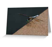 Dragonfly on Dock Greeting Card
