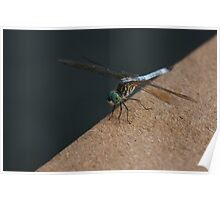 Dragonfly on Dock Poster