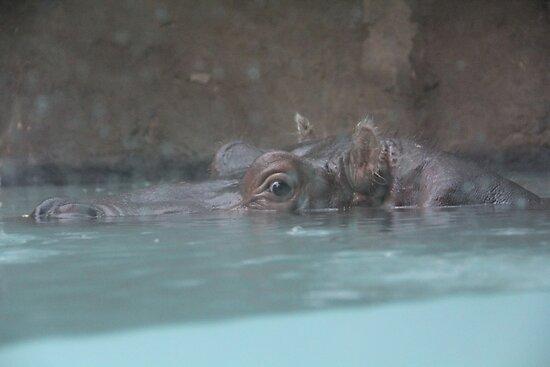 """Hippopotamus""  by Carter L. Shepard by echoesofheaven"