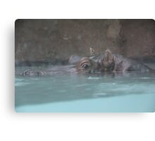 """Hippopotamus""  by Carter L. Shepard Canvas Print"