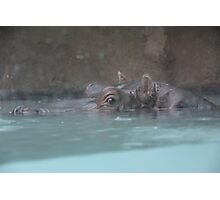 """Hippopotamus""  by Carter L. Shepard Photographic Print"
