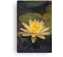 Pale yellow lily Canvas Print