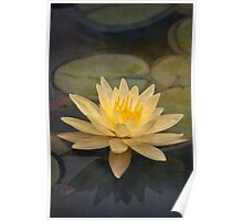 Pale yellow lily Poster