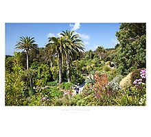 Tresco Gardens Photographic Print
