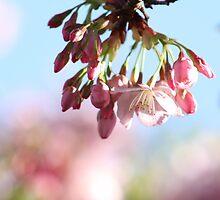 Sakura by CallMeDoctor