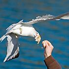 Seagull Get The Bread by TJ Baccari Photography