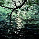 alzette river 14 by Diana Calvario