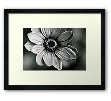 A Beauty in Black and White Framed Print
