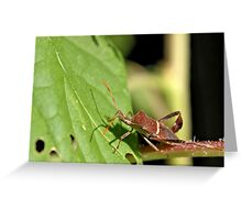 It's 108 Degrees Out - Have you seen my sunglasses? Greeting Card