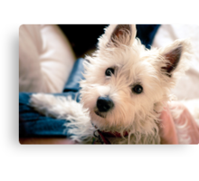 OK, so that's cute. Now do your war face. Canvas Print