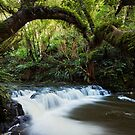 Deep in the Jungle - Catlins, New Zealand by Matthew Kocin