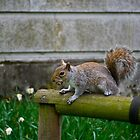 Squirrel by lorenzoviolone