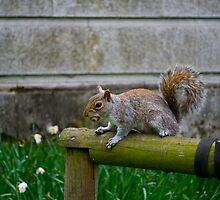 Squirrel by lorenzoviolone