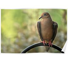 The Heart Of A Mourning Dove Poster