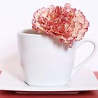 Carnation in Teacup, Peach by MelissaSue