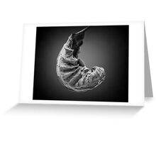 Christmas Cocoon Greeting Card