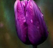 Tulip Tears by KBritt