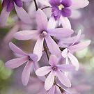 Purple Bokeh by Beth Mason