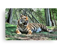 Untamed Beauty  Canvas Print