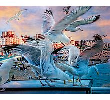 Seagulls on Brighton Pier Photographic Print