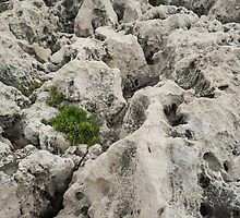 Life on Bare Rock - Weathered Limestone and Little Green Survivors by Georgia Mizuleva