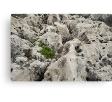 Life on Bare Rock - Weathered Limestone and Little Green Survivors Canvas Print