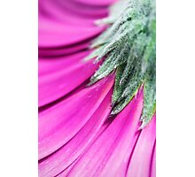 Purple Petals Photographic Print