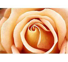 Petal Patterns Photographic Print