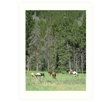 PACK STRING HORSES ON MAIN BOULDER CANYON ROAD Art Print