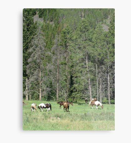 PACK STRING HORSES ON MAIN BOULDER CANYON ROAD Metal Print